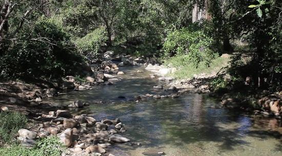 Profepa determinará afectación ecológica en Canoas: Virgilio