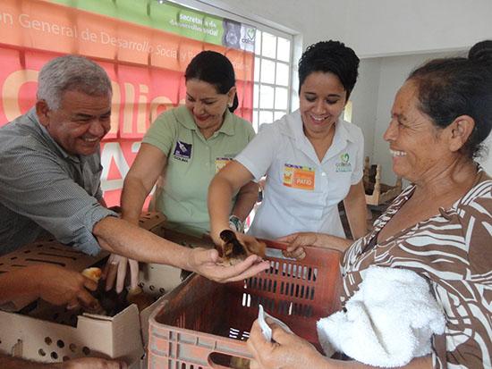 """Sedescol apoya a 163 familias con programa """"Gallinas en tu patio"""""""