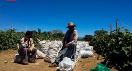 Colima, el estado que más migrantes atrae