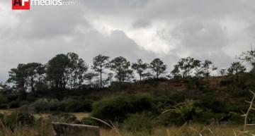 Conafor asigna 8.9 MDP para restauración forestal en Colima