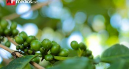 """""""En Colima se cultivan 2 mil 245 hectáreas de café"""": Seder"""
