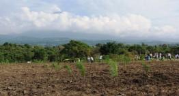 Se reforestaron 3.5 hectáreas de la Ex Hacienda de Caleras, Tecomán