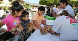 ¿Por qué Colima no tiene ningún caso de rabia en humanos y perros?