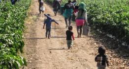 DIF Manzanillo confirma trabajo infantil en el campo porteño