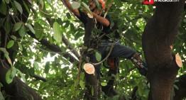 ¿Sabes qué hacer después de podar un árbol?