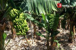 Productores agrícolas buscan incrementar exportación con mapas de ruta tecnológica