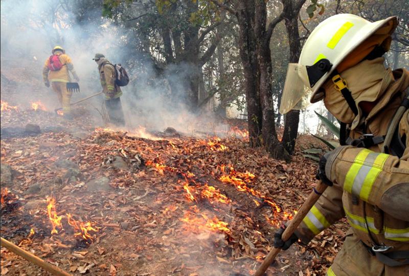 Reconocidos por combatir los incendios