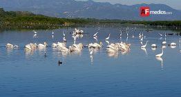 Hasta 120 millones se requieren para rescatar la laguna