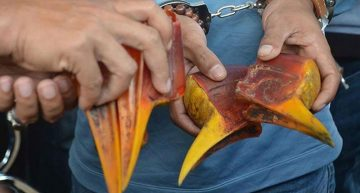 Cazadores furtivos buscan pico de ave rara en sureste asiático