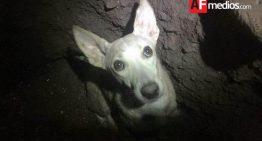 Protección Civil rescata a perro que cayó en noria