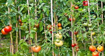Se aprueba nueva norma internacional para comercio de plantas y semillas: FAO