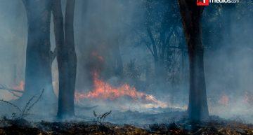 53 incendios en 2017, mil hectáreas afectadas: Conafor