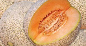 Agricultores de Ixtlahuacán abandonan producción de melón: Alcalde