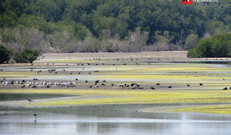 Cada vez hay menos agua en Laguna Valle de las Garzas: Semarnat
