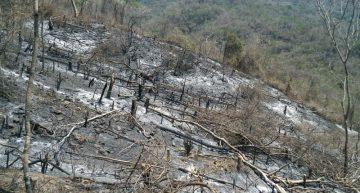 Por provocar incendio en predio, Profepa multa a propietario con 100 mil pesos