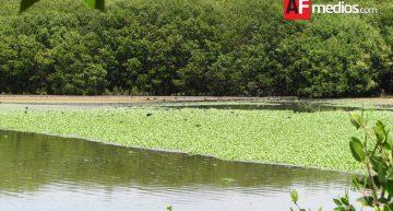 API anuncia dragado en Laguna del Valle de las Garzas