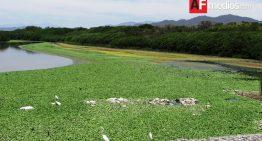 Laguna del Valle de Las Garzas invadida por Lirio