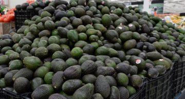 Profeco informa que precio del aguacate varía hasta 32 pesos kilo