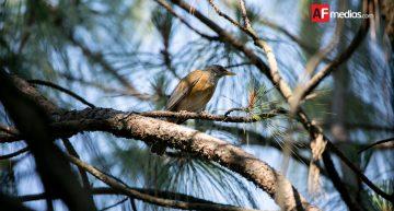 Gran Día Mundial de Observación de Aves