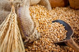 ¿Sabes cuál es el aporte nutricional de la cebada?