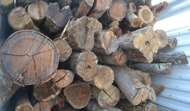Profepa aseguró 125 postes y suspendió aprovechamiento maderable