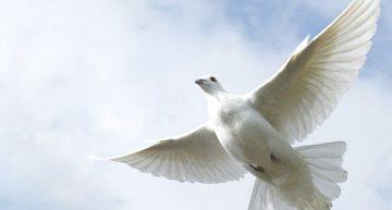 8 y 9 de mayo para recordar a víctimas de la Segunda Guerra Mundial