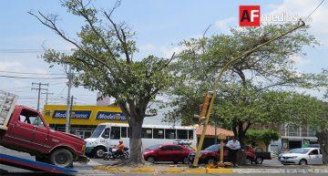 Conductor choca contra semáforo; estaba con picadura de alacrán