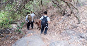 Binomio canino localiza cuerpo de joven extraviado en Acatitán