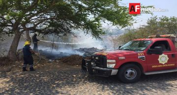 Bomberos de Colima combaten abejas e incendio