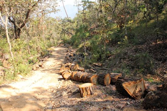 Necesario revisar decreto de reserva de la Biosfera Sierra de Manantlán: Diputada