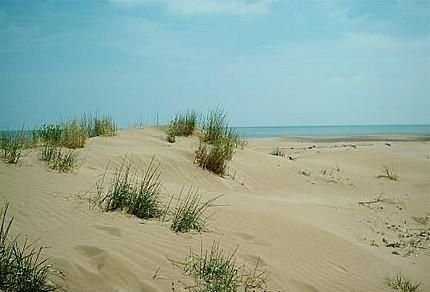 Dunas costeras mexicanas pierden 14% de su vegetación en los últimos 30 años: Conafor