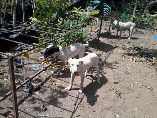 Control Canino de Colima funciona con 300 mil pesos anuales: Director