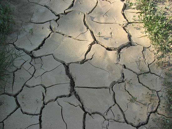Banco Mundial entregará a México 3.8 MDD para mitigación del cambio climático