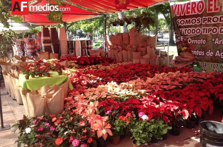 Colima distribuye plantas de ornato a todo el pa s for Viveros en colima
