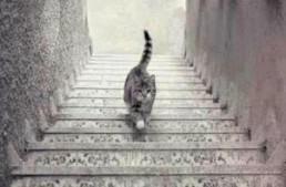Primero un vestido y ahora que si el gato sube o baja las escaleras