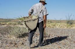 Agricultura y lucha contra el hambre en peligro: FAO