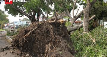 """""""Sí se hace trabajo de revisión de árboles; daños por fuertes vientos de tromba"""": PC Colima"""