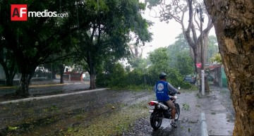 Alrededor de 15 árboles caídos en avenidas del norte de Colima por lluvia