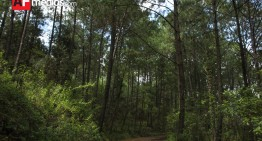 Reto global: frenar deforestación de 13 millones de hectáreas de bosque