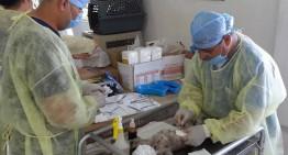 En septiembre y octubre esterilizaciones gratuitas de mascotas en Villa de Álvarez
