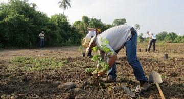 Conafor va por reforestación y mantenimiento de 4 mil 100 hectáreas