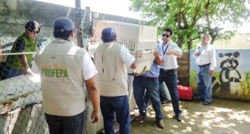 Profepa asegura 29 ejemplares de vida silvestre en Manzanillo