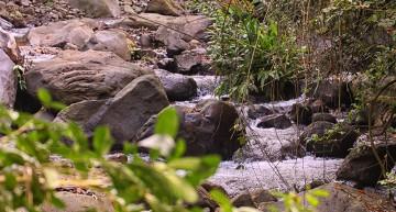 Biotopo invita a conocer la sección más conservada del Río Colima