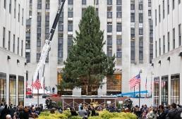 Aprovecharán árbol de Navidad del Rockefeller Center