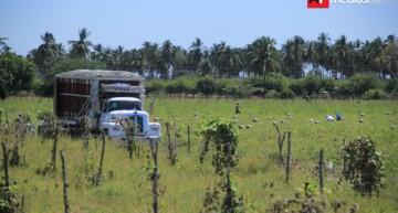 Productores esperan apoyos para disminuir impacto por 'gasolinazo': CNC Colima