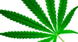 Día Internacional de la Marihuana