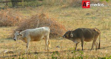 A la baja robo de ganado, tractores y fruta: CNC