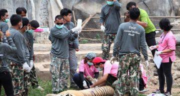 Autoridades en Tailandia rescatan tigres de un templo