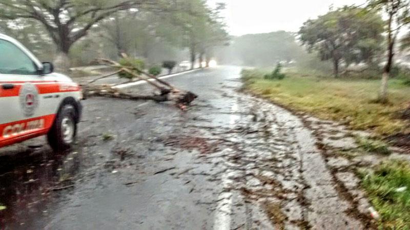 Cae árbol en carretera Colima – Comala