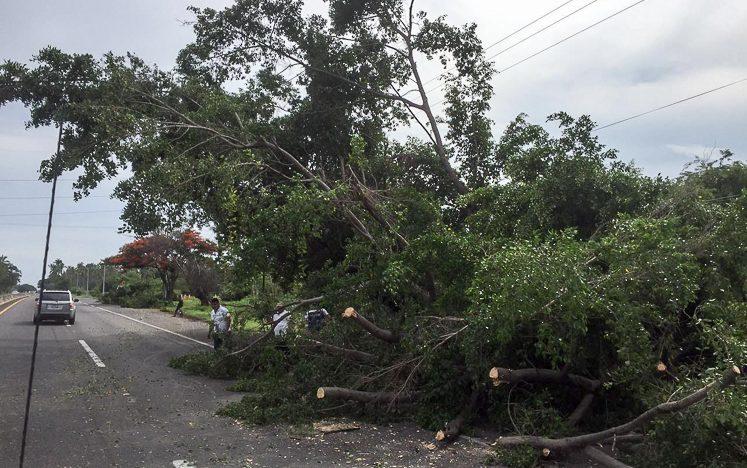 Retiro de árbol caído genera tránsito lento en autopista